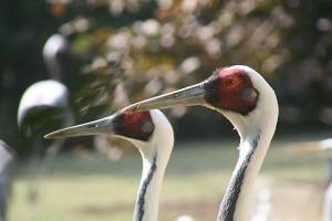 twin-cranes